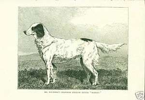 EARLY ENGLISH SETTER DOG ANTIQUE DOGS PRINT 1881