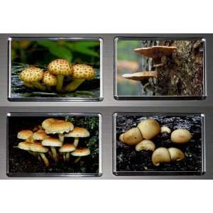 Gift Boxed Set of 4 Fridge Magnets Fungus Mushrooms 4