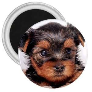 Yorkshire Terrier Puppy Dog 8 3in Magnet S0655 Everything