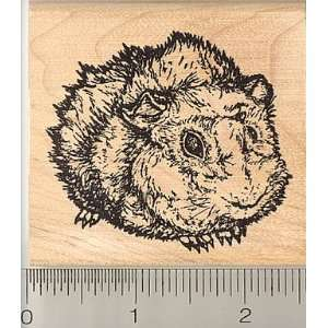Large Abyssinian Guinea Pig Rubber Stamp   Wood Mounted