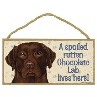A house is not a home without Chocolate Labrador Retriever